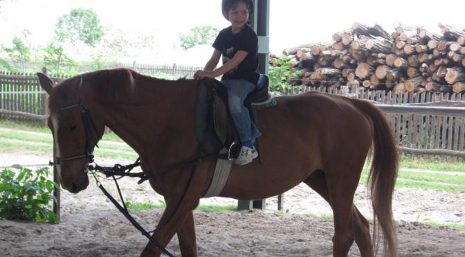 szülinapi lovasprogram