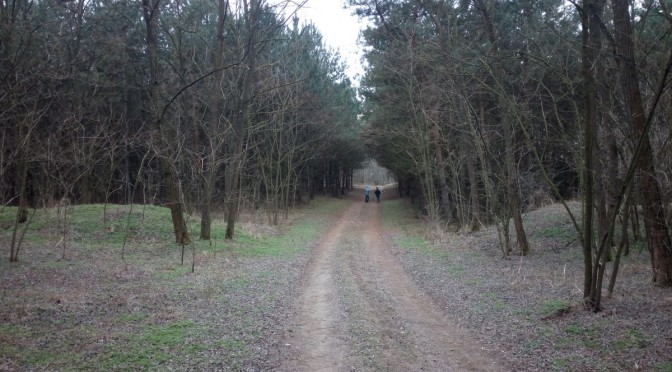 Séta a pótharaszti erdőben